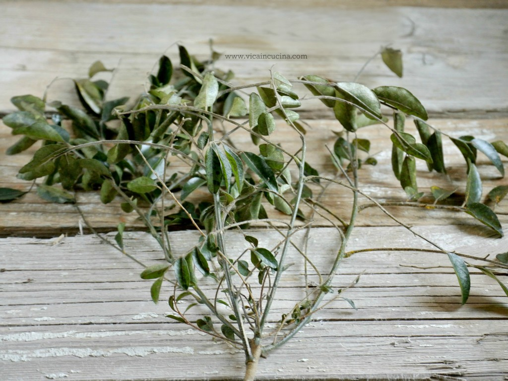 How to Store and Preserve Curry Leaves